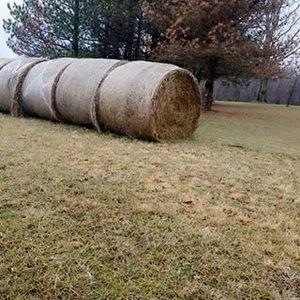 Medium hay 2