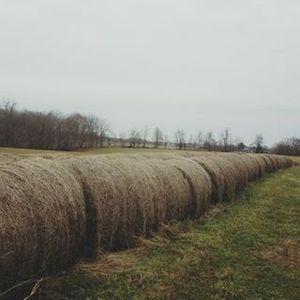 Medium hay 3