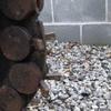 Thumb cat stump cutter 1