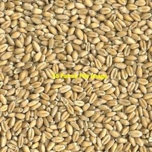 Medium wheat