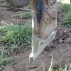 Thumb 2012 case ih precision 800 planter 5