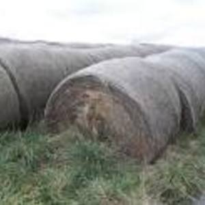 Medium fescue big bales