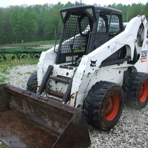Medium holbrook bobcat 1
