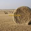 Horse Quality Wheat Hay Wanted