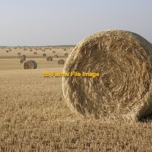 Medium wheat hay