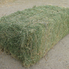 Orchard Hay For Sale