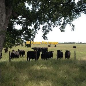 Medium grass lease texas