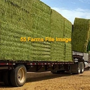 Medium alfalfa hay   big squares