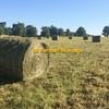 Red Glover/Grass Mix Hay