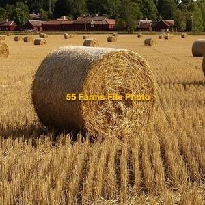Medium straw   rolls