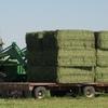 2nd Cut Alfalfa Hay in Large Squares