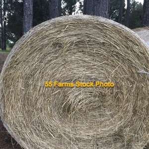 Medium fescue rolls