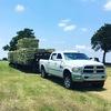 Fresh Cut Coastal And Alfalfa Hay