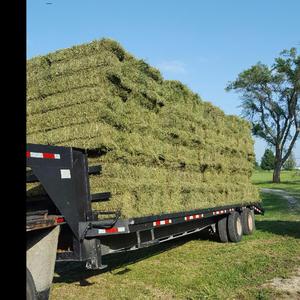 Medium baled alfalfa