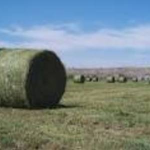 Medium alfalfa big bale