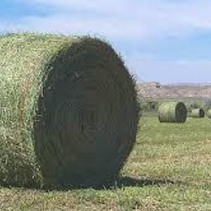 Medium alfalfa bale photos string tie