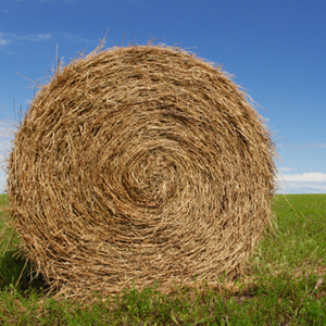 Medium stock photo of bermuda hay