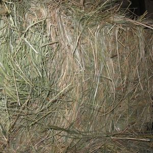 Medium sample image of teff hay sq bales