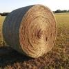 Prairie Hay - Big Round Bales