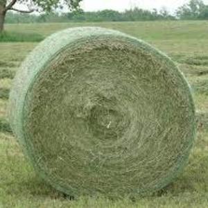 Medium alfalfa big bale sample 2