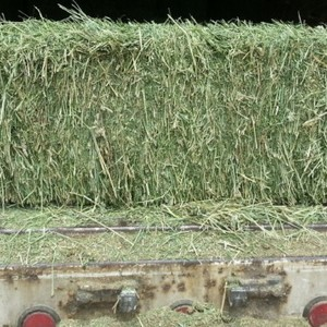 Medium alfalfa small square bale sample