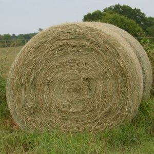 Medium sample photo of bermuda hay big