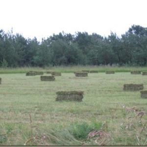 Medium sample small sq prairie hay
