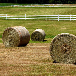 Medium sample photo of fescue big bales