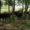 Thumb steeg steer 2