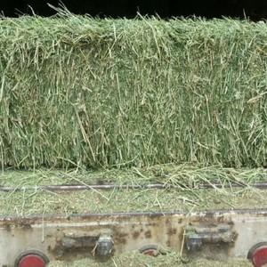 Medium alfalfa small square bale sample