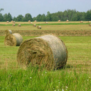 Medium sample photo of sudan hay big bale