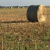 Haygrazer - big sq