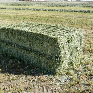 Medium sample photo of oat hay  big square