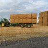Corn Stalks- big squares