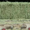 Alfalfa Small Squares