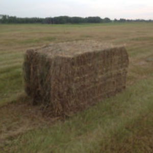 Medium sample photo of grass fescue mix big square bale