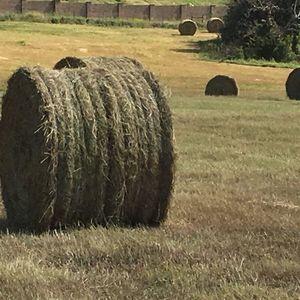 Medium sample of prairie hay big bales   string