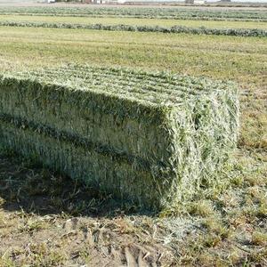 Medium sample photo of oat hay  big square
