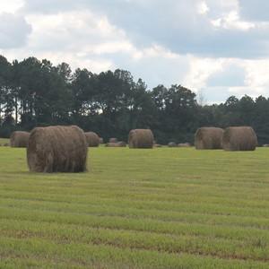 Medium sample photo of bahia hay round bale