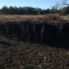 47 Angus, Angus Cross, Black Angus Bred Heifers