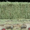 Alfalfa Small Squares -- wire