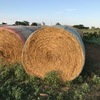 1500 rolls of Wheat Hay near Haskill Texas